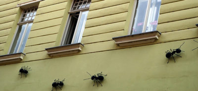 Take Action Against Ants